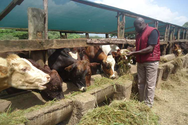 Food Security In Uganda